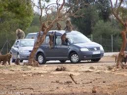 Safari Zoo Cala Bona