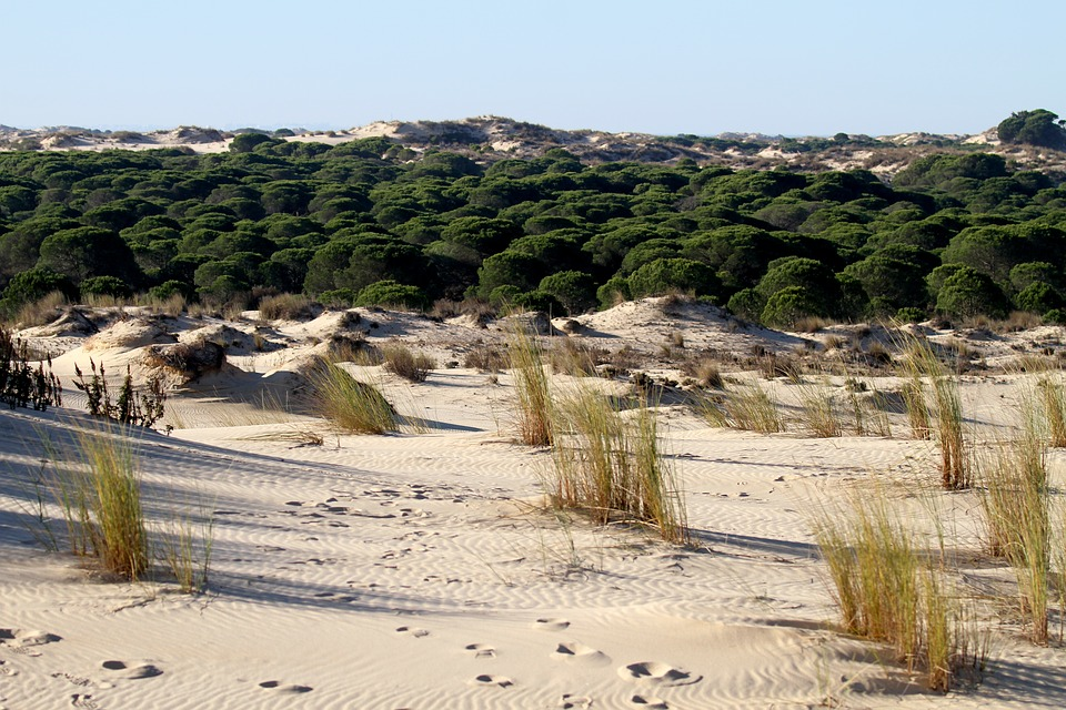 donana-national-park-